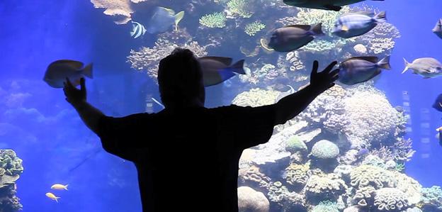 Public aquarium display tank