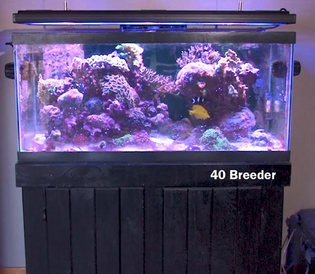 40 breeder size reef tank