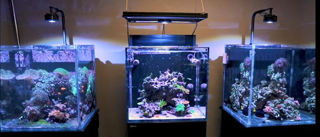 ULM Tanks in Ryan's Office