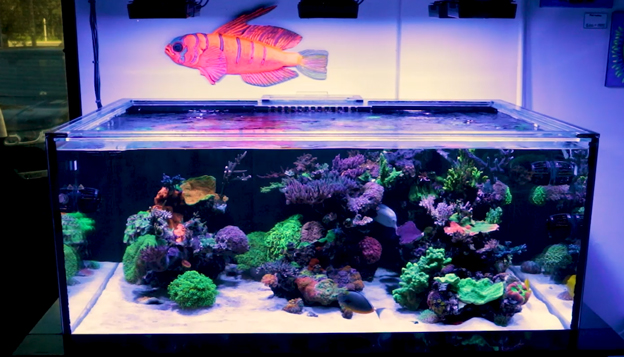 Deep dimension reef tank