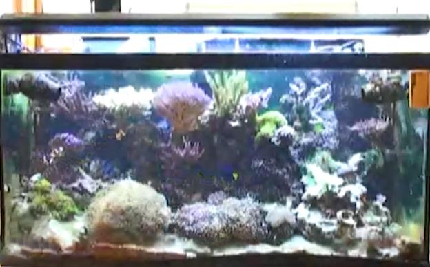 Ryan's 90 gallon reef tank