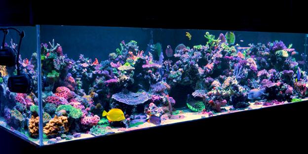 Display tank at world wide corals