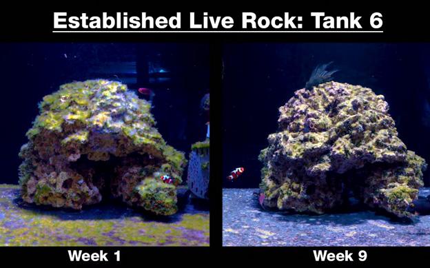 Vibrant Test Tank #6