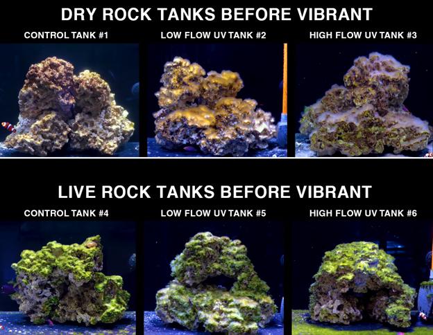 Algae Infested Test Tanks