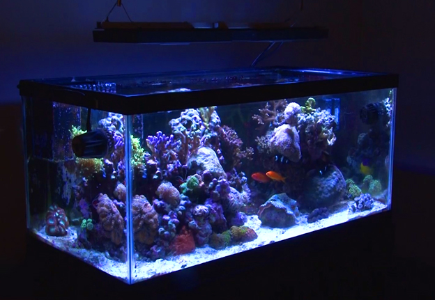 40 breeder standard black framed aquarium