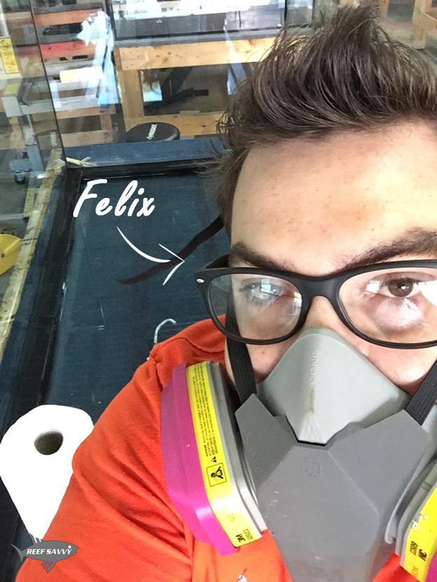 Felix of Reef Savvy working inside an aquarium