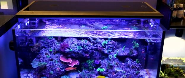 Reef Savvy Tank at BRS