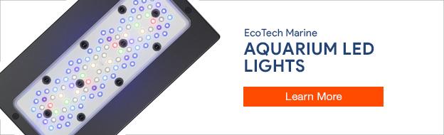 Shop EcoTech Marine LED Lights