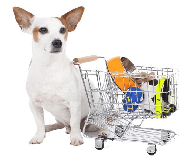 Dog with dog supplies