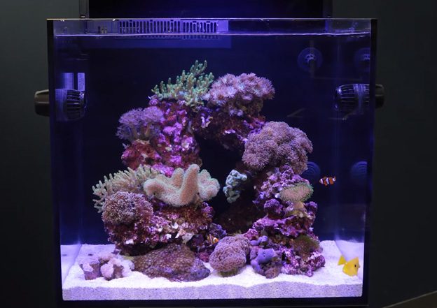 Clean and well maintained reef tank