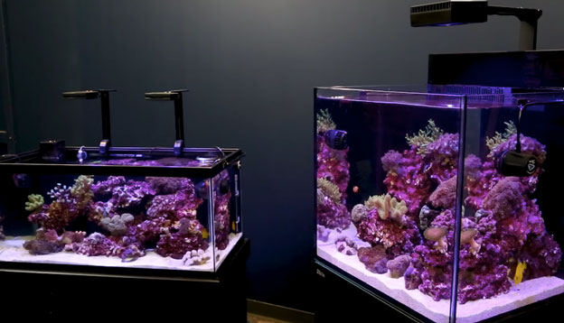 Two small reef tanks at the BRS studio