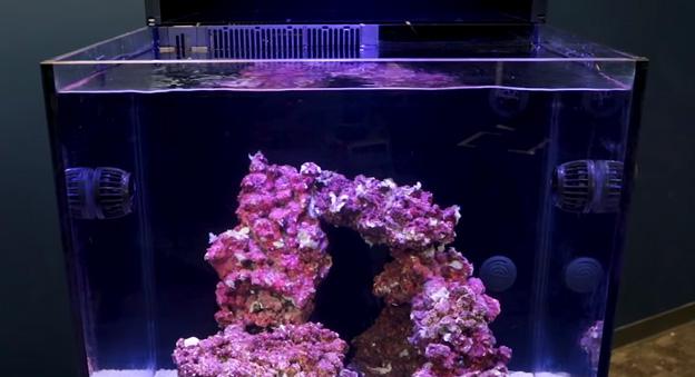 RedSea E170 Aquarium