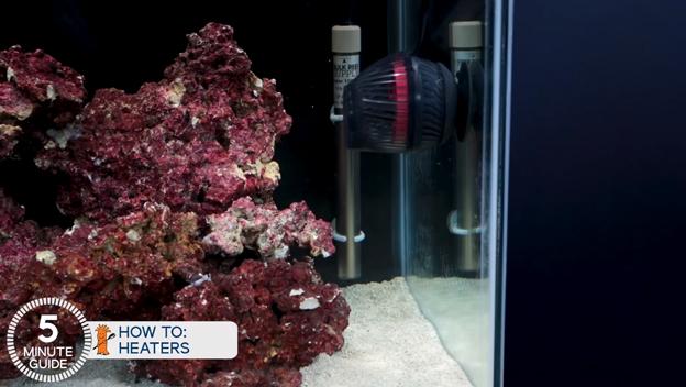 BRS heater inside 40 breeder