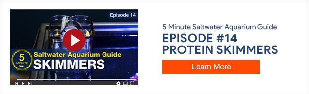 5 Minute Saltwater Aquarium Guide Episode #14