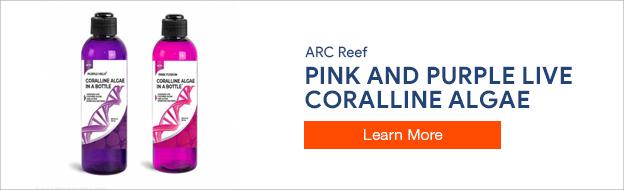ARC Reef Live Coralline Algae