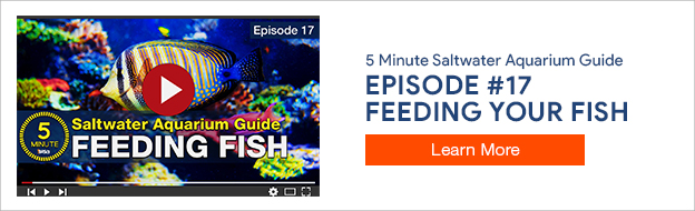 5 Minute Saltwater Aquarium Guide Episode #17