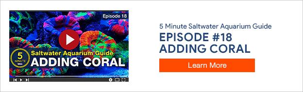 5 Minute Saltwater Aquarium Guide Episode #18