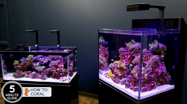 40 Gallon BRS tanks with new corals