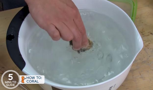 Ryan dipping a coral frag