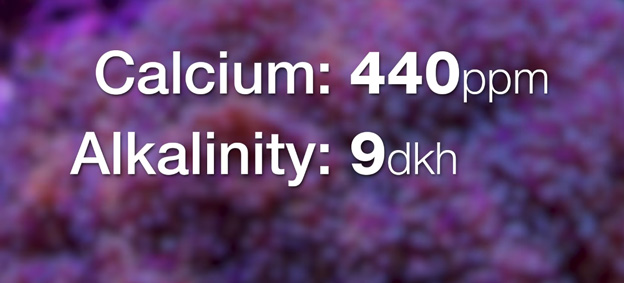 Calcium and Alkalinity Levels
