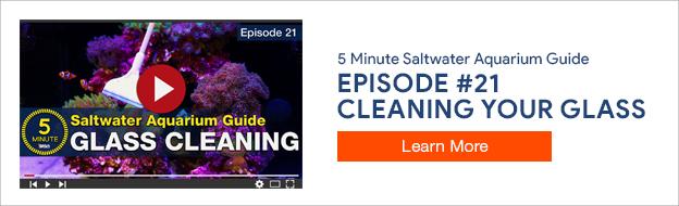 5 Minute Saltwater Aquarium Guide Episode #21