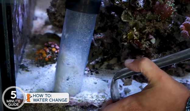 How to clean your sand bed with a siphon tube