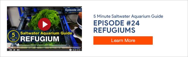 5 Minute Saltwater Aquarium Guide Episode #24