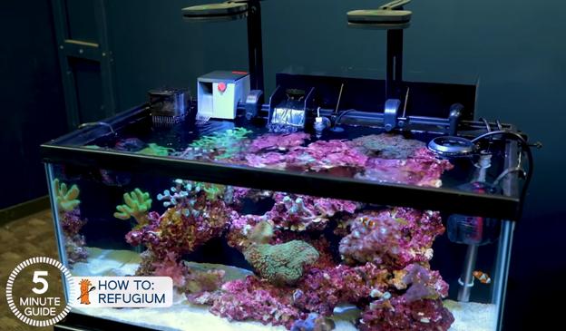 CPR Aquafuge on 40 Breeder aquarium