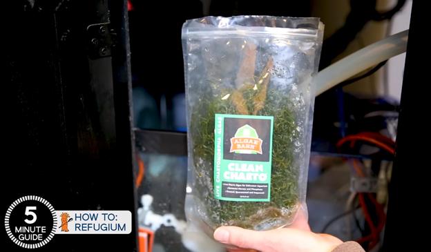 Algaebarn Chaetomorpha packaging