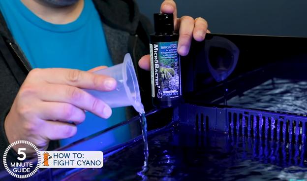 Dosing Brightwell Aquatics MicroBacter 7