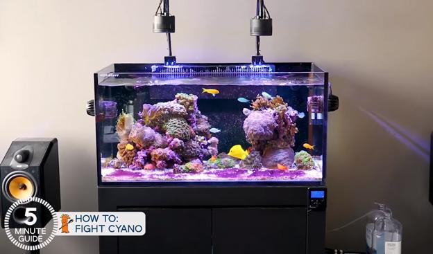 Ryan's Tank with Cyanobacteria