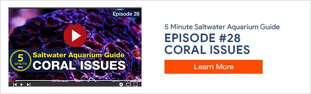 5 Minute Saltwater Aquarium Guide Episode #28