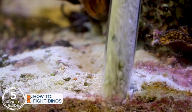 Siphoning dinos out of the tank with a siphon tube
