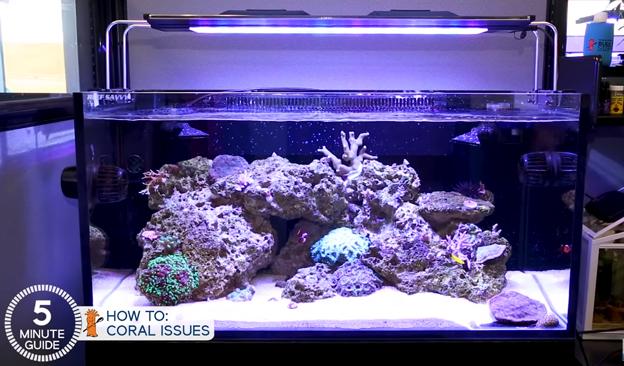 Bright fish tank