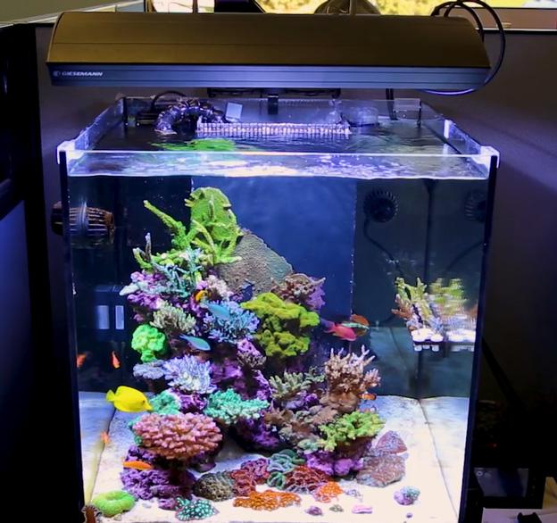 Cube shaped reef tank