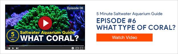 5 Minute Saltwater Aquarium Guide