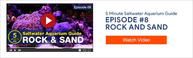 5 Minute Saltwater Aquarium Guide Episode #8