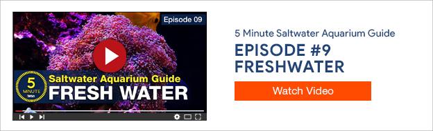 5 Minute Saltwater Aquarium Guide Episode #9