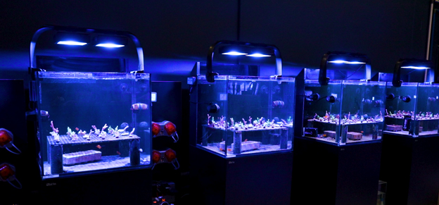 Red Sea test tanks in BRS lab