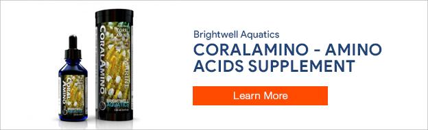 Brightwell CoralAmino