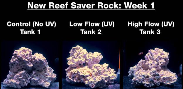 Week 1 - new dry rock