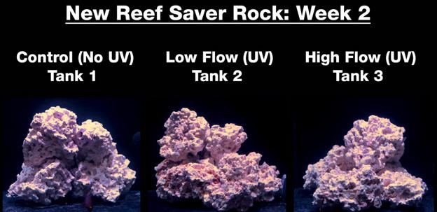 Week 2 - new dry rock
