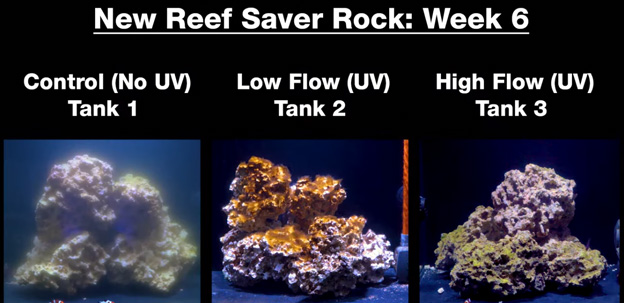 Week 6 - new dry rock