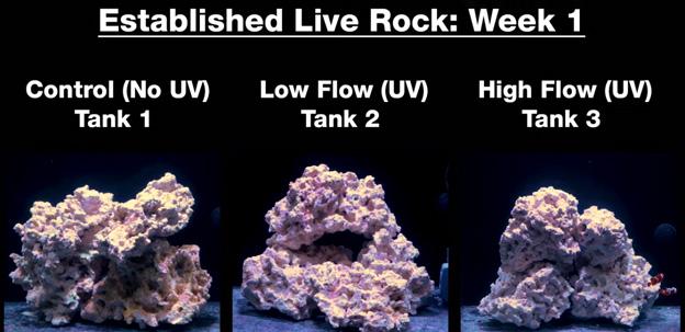 Week 1 - Old established rock