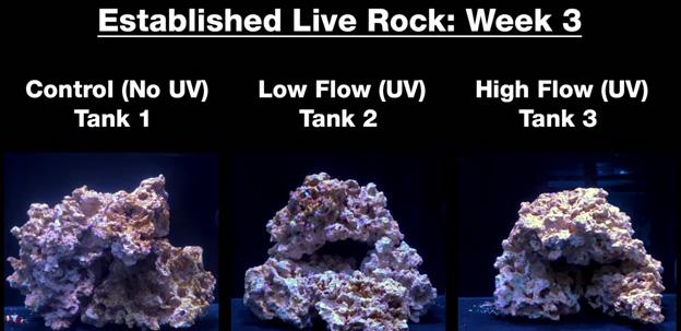 Week 3 - Old established rock