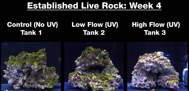 Week 4 - Old established rock