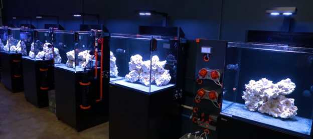 Red Sea E170 test tanks in BRS Lab