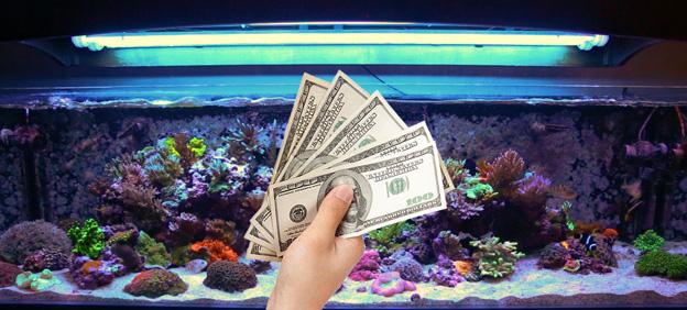 Reef tanks cost money