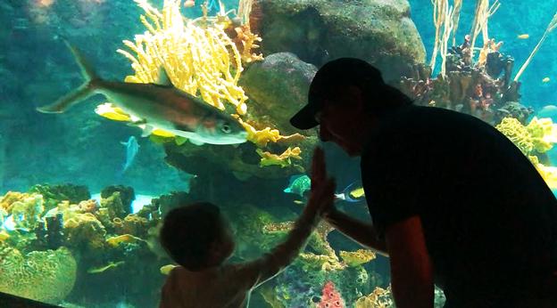 Ryan and son at public aquarium
