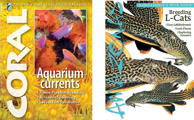 Coral and Amazonas Magazine
